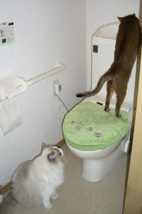 トイレ2月19日.jpg